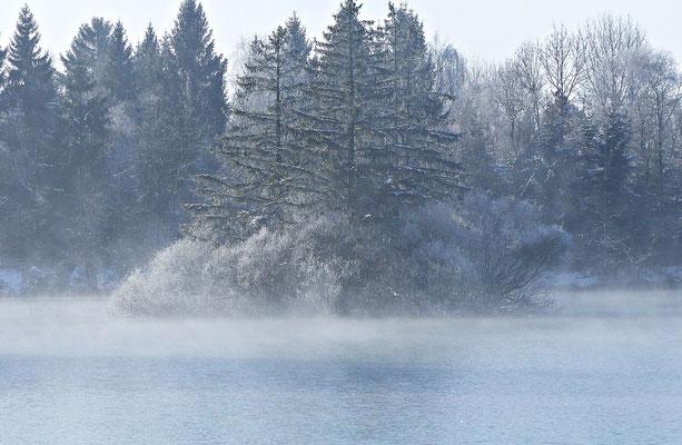 Auensee im Winter
