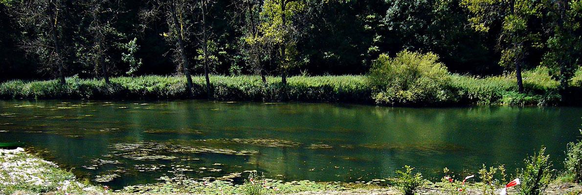 Die junge Donau