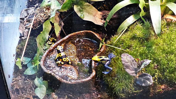 Der Reptilienzoo in Füssen