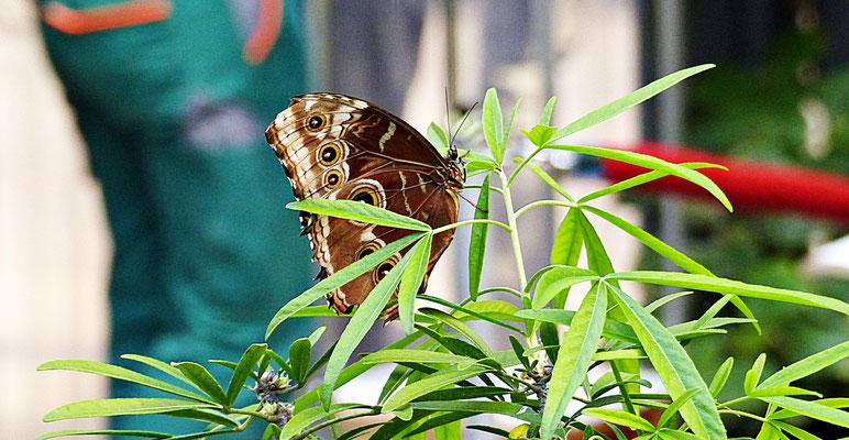 Schmetterlinge im Botanischen Garten Augsburg