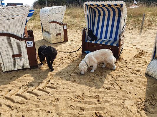 Unser Strandkorb in Sahlenburg, heute ist nich nix los!