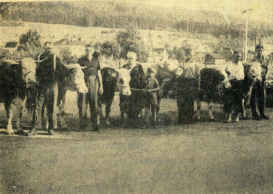 Kalter Markt entstand aus einem Viehmarkt