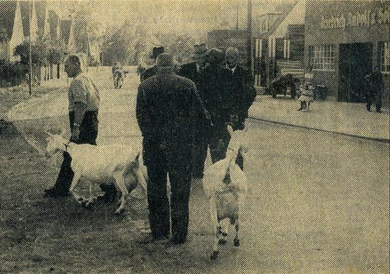 Kalter Markt war ursprünglich ein Viehmarkt