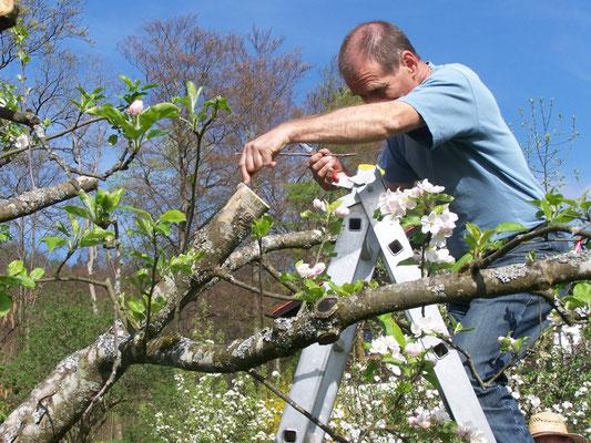 Veredlungskurs mit Fachberater, Kreisverband für Gartenbau und Landespflege Rosenheim e.V