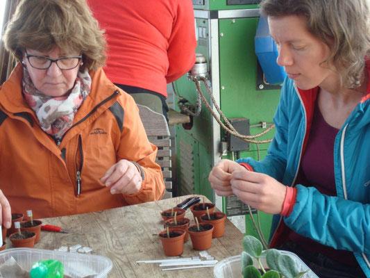 Kurs Jungpflanzenanzucht Kreisverband für Gartenbau und Landespflege Rosenheim e.V.
