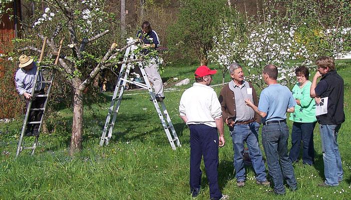 Kursus Obstbäume richtig schneiden, Kreisverband für Gartenbau und Landespflege Rosenheim e.V.