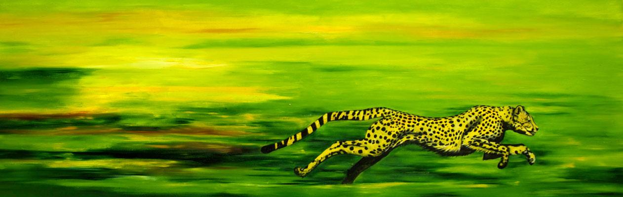 Acinonyx jubatus  ~  cheetah ~ Gepard  ~ ghepardo ~ guépard ~ guepardo ~ гепард ~ 獵豹 ~チーター~  الفهد الصياد~ चीता  ----- 60 x 180 cm oil/canvas