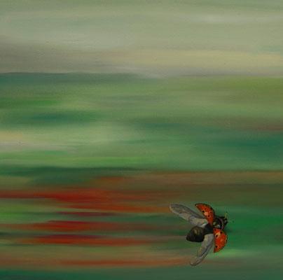 ~ Ladybug ~ Marienkäfer ~ cocinella ----- 40 x 40 cm oil/canvas