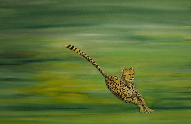 Acinonyx jubatus  ~  cheetah ~ Gepard  ~ ghepardo ~ guépard ~ guepardo ~ гепард ~ 獵豹 ~チーター~  الفهد الصياد~ चीता  ----- 40 x 60 cm oil/canvas