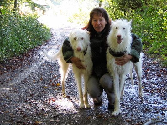 Zwei Podencos mit ihrem Menschenfreund