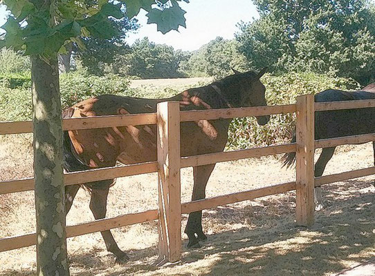 Cloture pour chevaux