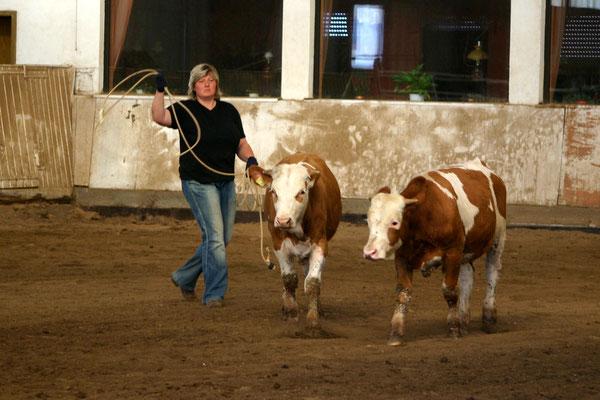 Trockenübungen mit Kuh