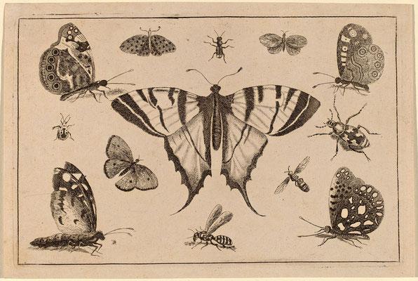 Ласточкин хвост Бабочка и двенадцать других насекомых