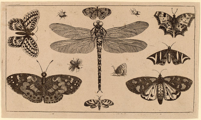 Стрекозы, Божьи коровки и бабочки