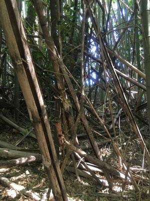 真竹竹林、整備前