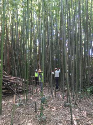 なごや竹和会のメンバーが整備中