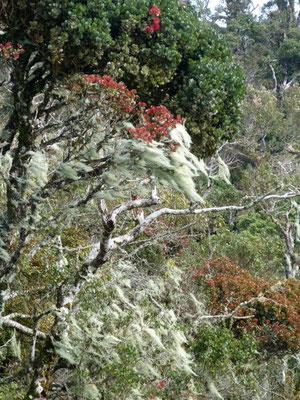 Sinharaja Blühende Bäume