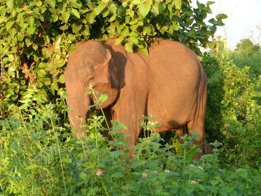 Wirawila Elefant
