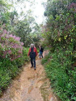 Spaziergang im Sinharaja