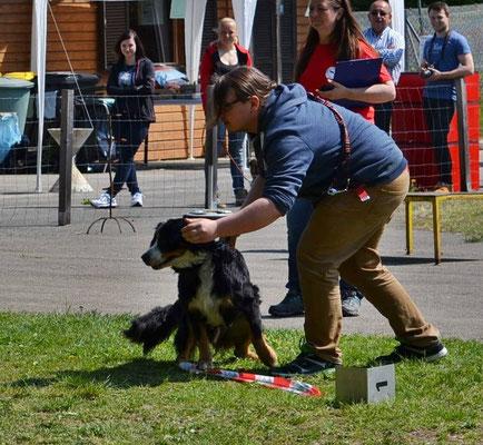 Eine große Herausforderung für viele Hunde: Den Bällen beim Zielwerfen nicht nachlaufen!