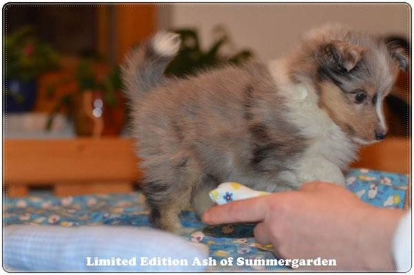 6 Wochen alt / 6 weeks old