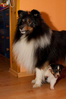 Chester und klein Orry