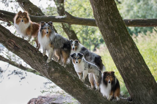 Venja, You, Kiwi, Twain und hinterbei Nash