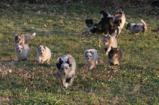 Nachwuchs in Italien/Offspring in italy/breeder:Simona Martinengo