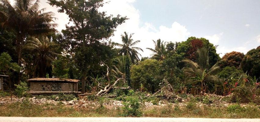 Baumbestand in Msumarini