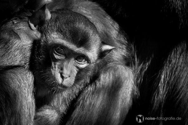 Affe im Tierpark Gotha