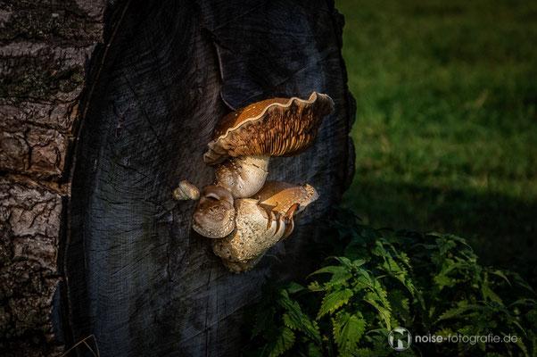 Pilze in der Nachmittgassonne