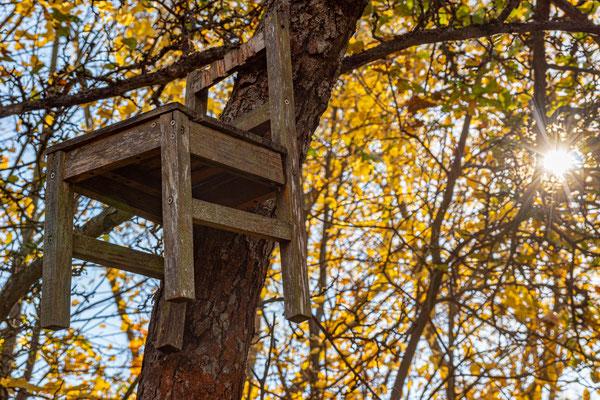 Stuhl am Baum - Feensteig Hainich