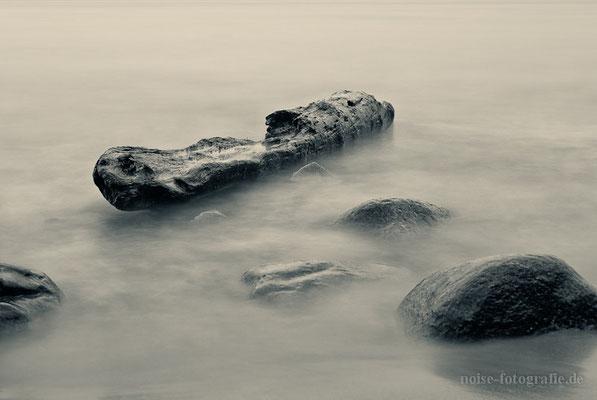 Treibholz am Strand vom Binz