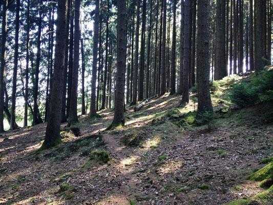 nur noch ein Pfad durch den Wald