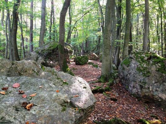 noch mehr Steine im Wald