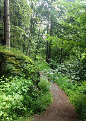 Im Wald kurz vor Willingen