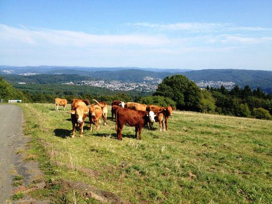 Blick auf Fleisbach, davor frei laufende Kühe