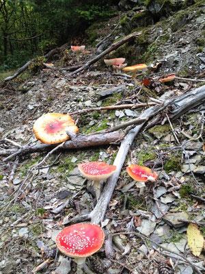 Schöne, böse Pilze!