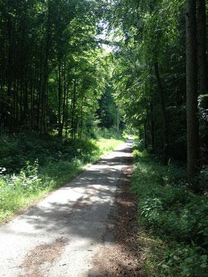 Emmerweg: schattige Wälder