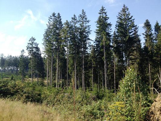 auf den Höh'n hörte ich das Wispern der Wälder...