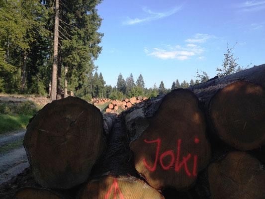 das Holz gehört Joki :-)