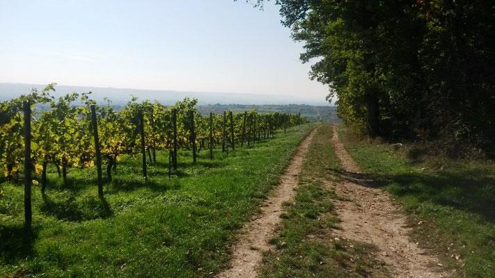 und da liegt es vor mir: das Rheintal (Blick nach rechts)