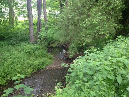 Der Emmer: üppige Vegetation kurz vor der Quelle
