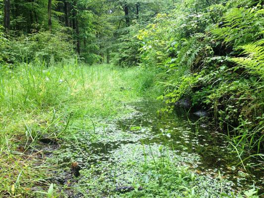 kein Teich, sondern Weg