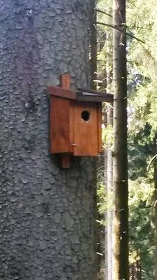 lebt hier ein Vogel? Vielleicht meiner...