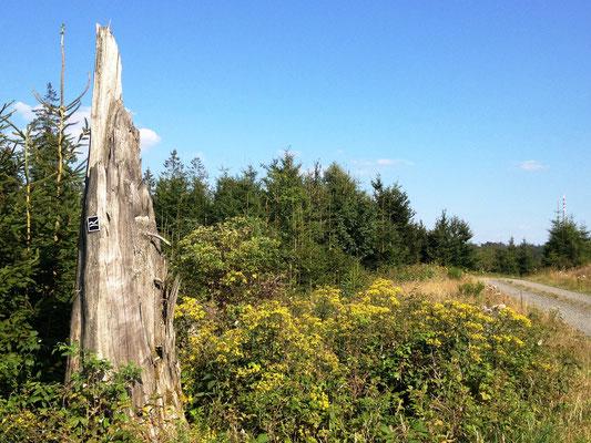 Wegmarken werden oft an Totholz befestigt