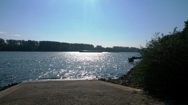 glitzernder Rhein