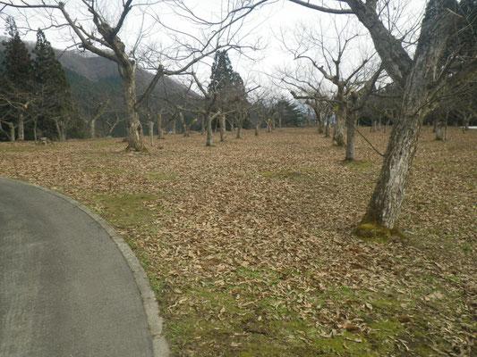 八津中心コース