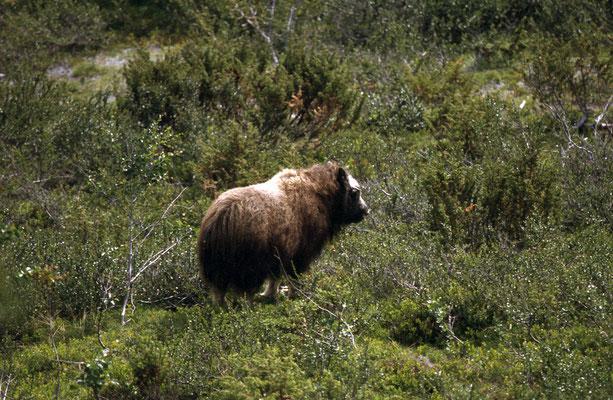 Norwegen_2005_Jürgen_Sedlmayr_281