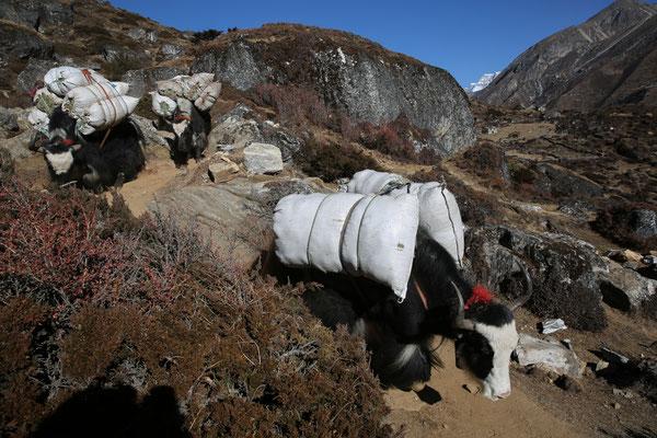 Fotogalerie_Nepal_Everest2_Reisefotograf_Jürgen_Sedlmayr_154